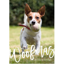 Christmas Photo Cards 5x7 Cards, Premium Cardstock 120lb with Elegant Corners, Card & Stationery -Christmas Woofmas