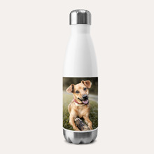 Stainless Insulated Water Bottle, Gift