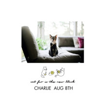 Pet Canvas Print, 12x12, Home Decor -Hipster Kitten