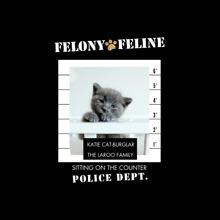 Pet Canvas Print, 12x12, Home Decor -Felony Feline