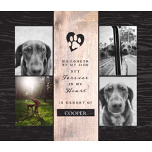 Pet Framed Canvas Print, Black, 20x24, Home Decor -The Good Pet