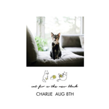 Pet Framed Canvas Print, Black, 16x20, Home Decor -Hipster Kitten